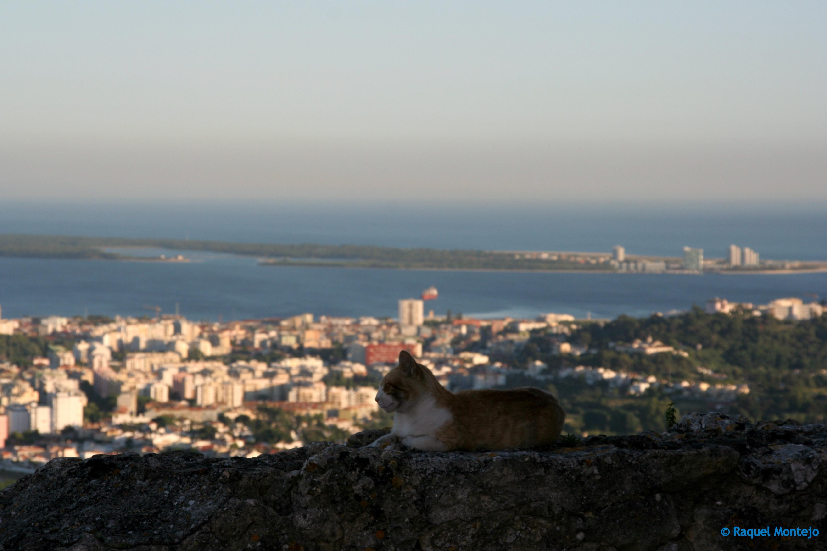 Un gato con vistas